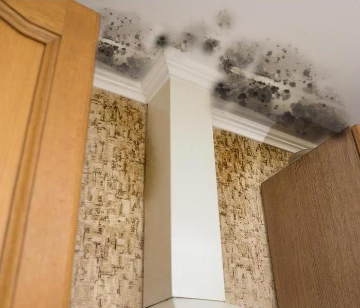 Mold Remediation Prevent Mold Growth in Your Facility With These Easy-to-Follow Methods