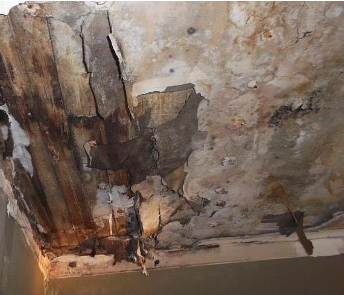 Mold Remediation Keeping Mold Under Control During the Remediation Process