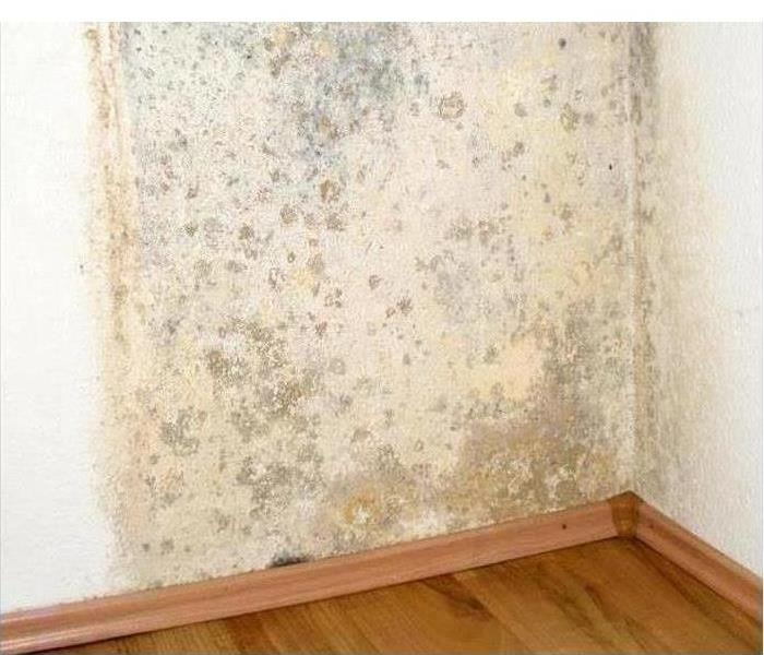Mold Remediation What Every Homeowner Should Know About Mold Growth