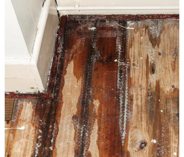 Storm Damage 4 Ways to Prevent Mold After Your Home Floods
