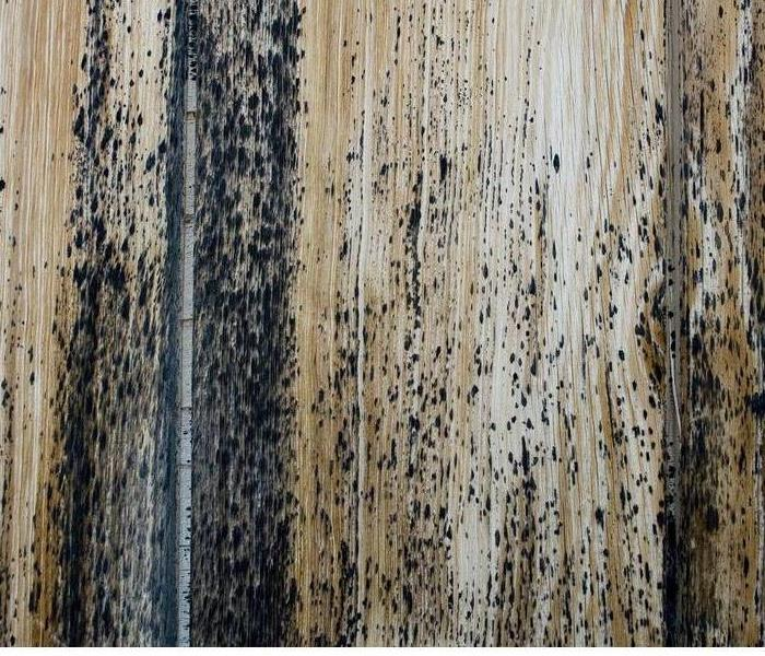 Commercial Best Ways to Prevent Mold Damage